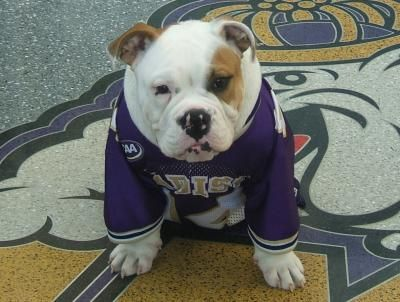 Live Duke Dog from JMU football game runout