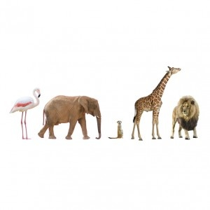 real-life safari from The Wall Sticker Company