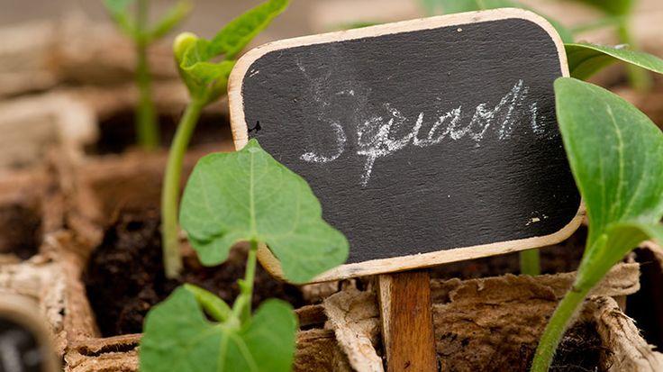 Zelf plantenlabels maken
