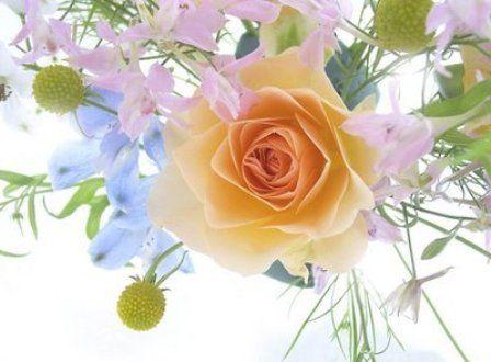 World-Most-Beautiful-Flowers-Photos6.jpg