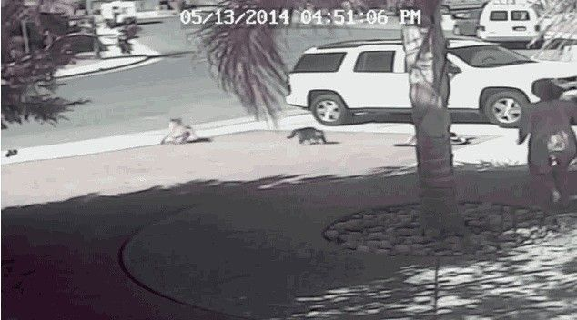Family Cat Saves Child From Dog Attack http://www.myfoxla.com/video?clipId=10162216&autoStart=true