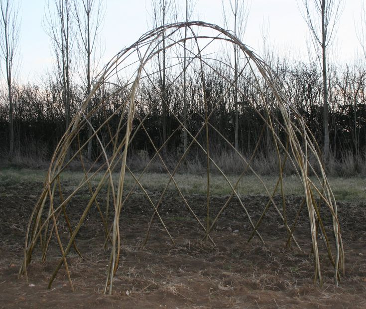 Willow Varieties
