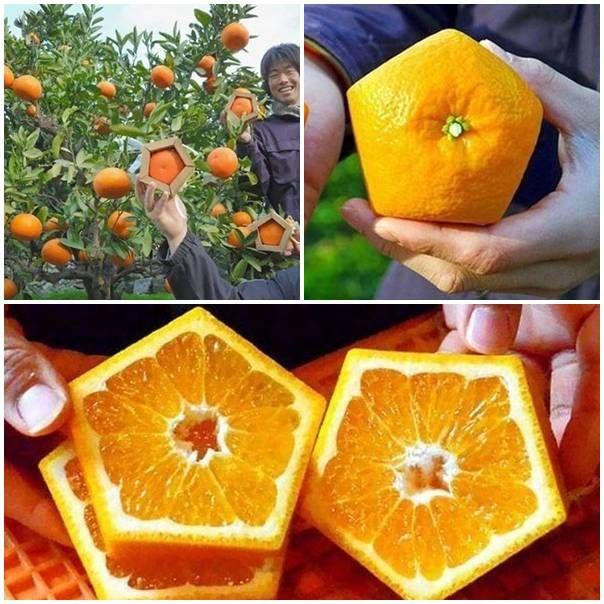 DIY Pentagonal Oranges | UsefulDIY.com Follow Us on Facebook ==> http://www.facebook.com/UsefulDiy