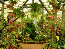 Orchid House Mackay