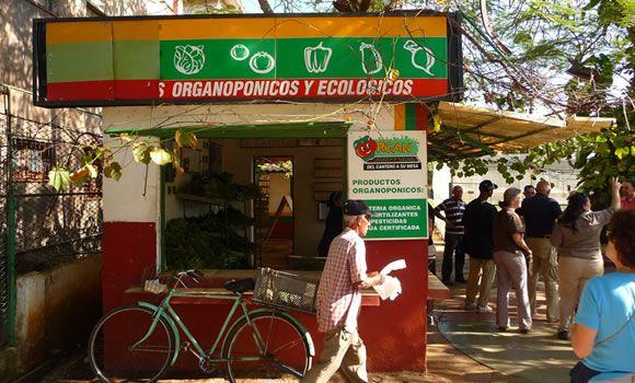Cuba Organica  Organopónicos (systems of urban organic gardens) provide much of the food in Cuba.
