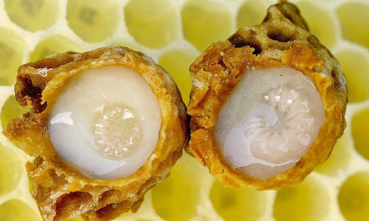 royal jelly and testosterone levels