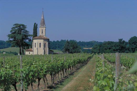 Vineyards at Bordeneuve where the vines are dedicated to Armagnac