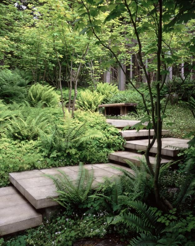 San Juan Island Residence: The visitor is taken down through the canopy of the woods to the house. Lush plantings are an equal match to the strongly expressed pathway.