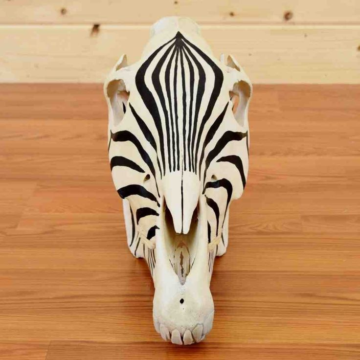 Painted Zebra Skull for Sale - SW9068 - Safariworks Taxidermy Sales