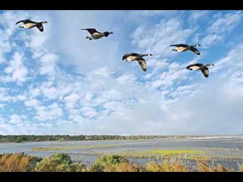 Lessons of the Geese. This is a great, thoughtful message on how we all relate to each other. It carries a strong theme of cooperation and teamwork empowering us to reach individual as well as shared goals.  Learn more at http://www.insearchofmecafe.com/fittingIn.aspx