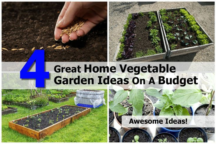 4 Great Home Vegetable Garden Ideas On A Budget - http://www.hometipsworld.com/4-great-home-vegetable-garden-ideas-on-a-budget.html