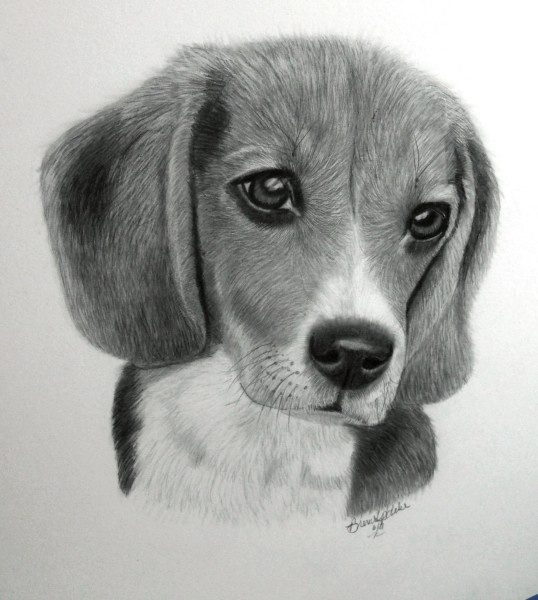 A Beagle I did for my grandson Jakob for his birthday