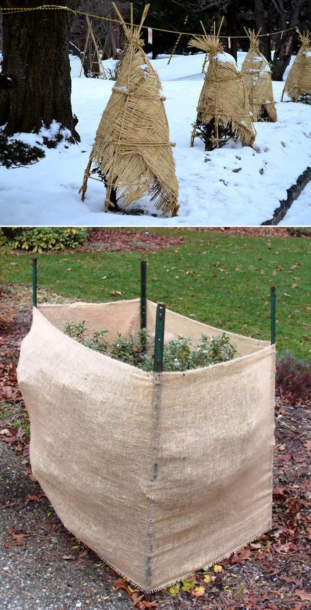 Build Burlap Barricades To Protect Your Fruit Trees And Bushes From Winter Hungry Deer And Rabbit Fruit Trees Plant Protection Outdoor Gardens