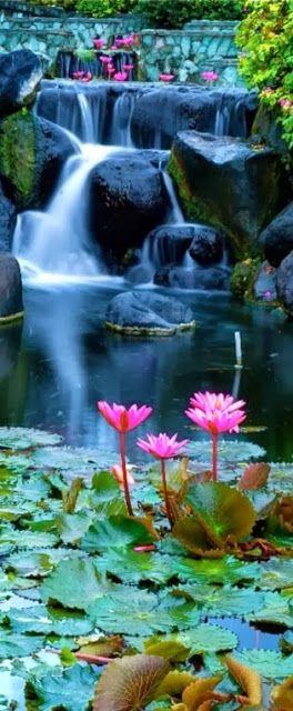 Lotus blossom waterfall - Bali, Indonesia
