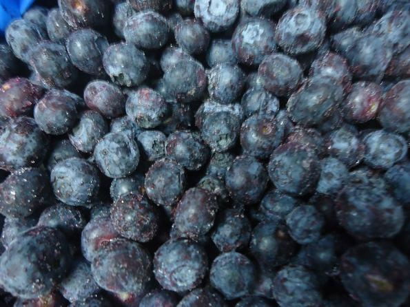 Chilean Blueberries   Variety: Duke-O´Neal  Product: Frozen whole blueberries  Line: Frozen  Quality: IQF A quality