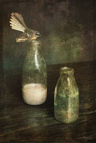 """Fantail by Lucy Gauntlett;  supposedly a sign of an impending death in a household if it comes into one's home, according to te Māori legend. Feasts on small insects, taking them while """"on the wing""""."""