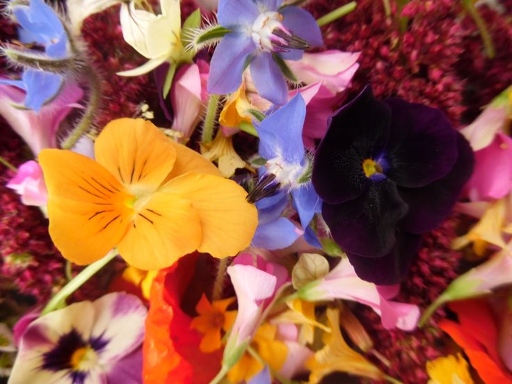 Lindas y comestibles flores cultivadas en el interior de nuestra Región de Valparaíso