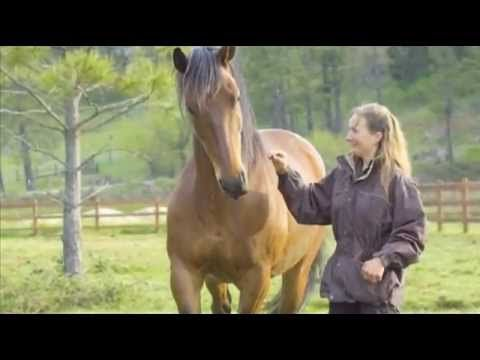 Documentary : The Path of the Horse