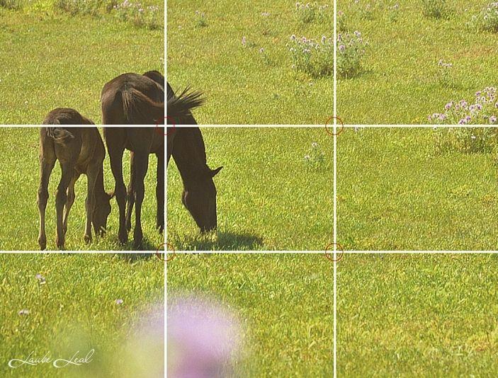La regla de los tercios en fotografía