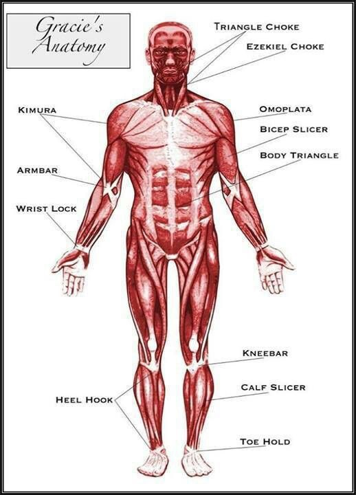 Anatomy in Brazilian Jiu Jitsu
