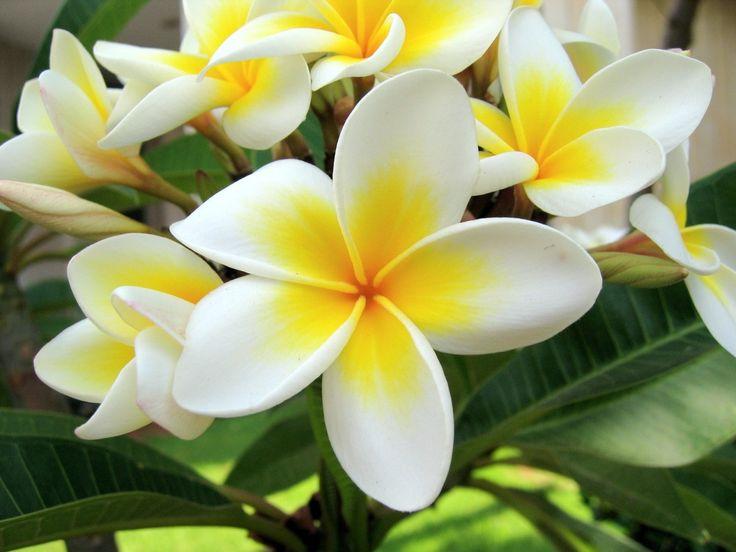 fleurs blanches osmoz.jpg (1280×960)