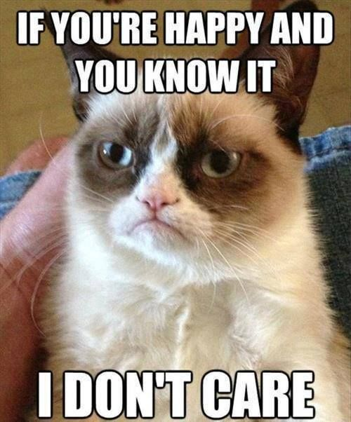 The 30 Best Grumpy Cat Memes You Can Respond to Emails With