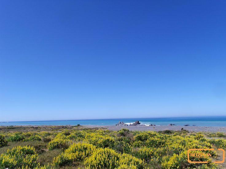 Planten in bloei nabij een strand ten oosten van Wellington.