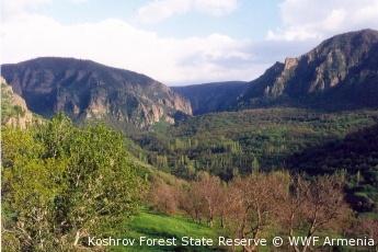 Koshrov Forest State Reserve, Armenia