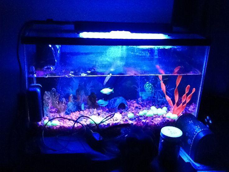 glow fish tank mud pinterest