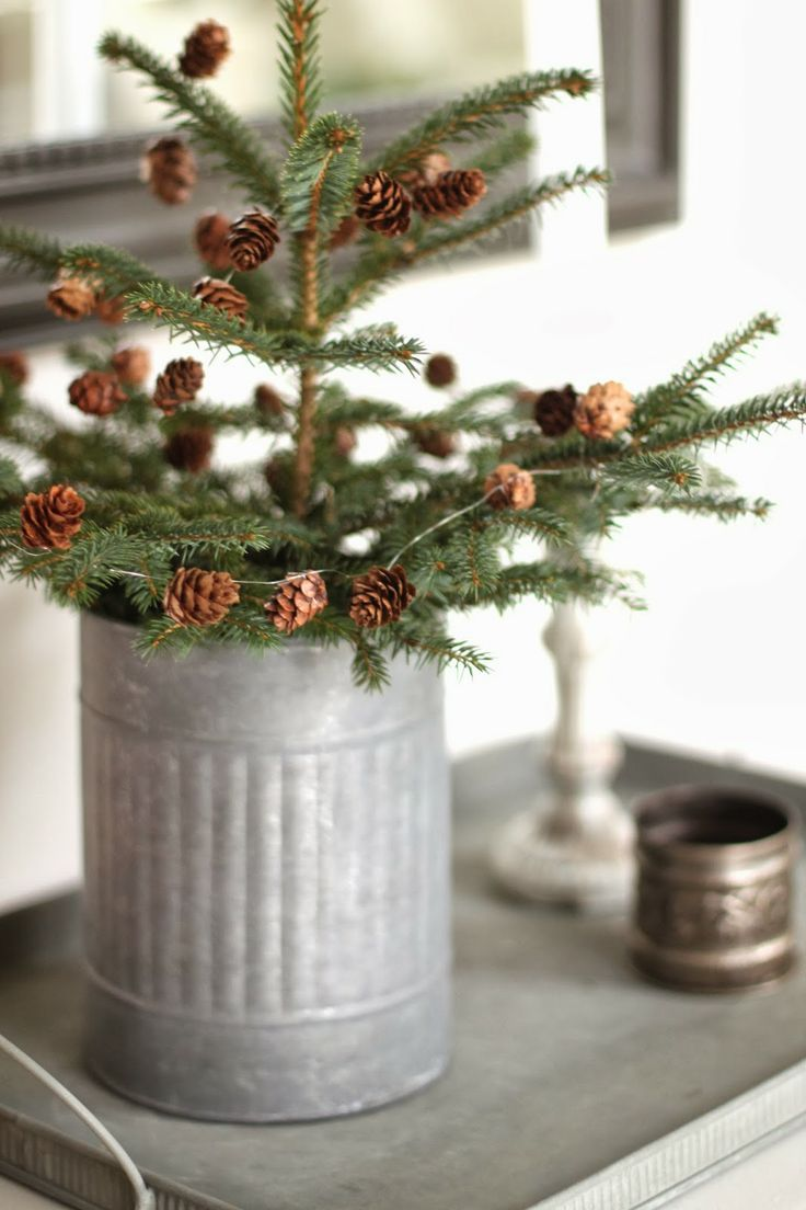 Simple living tree in a galvanized bucket or tin can for Christmas tin pails