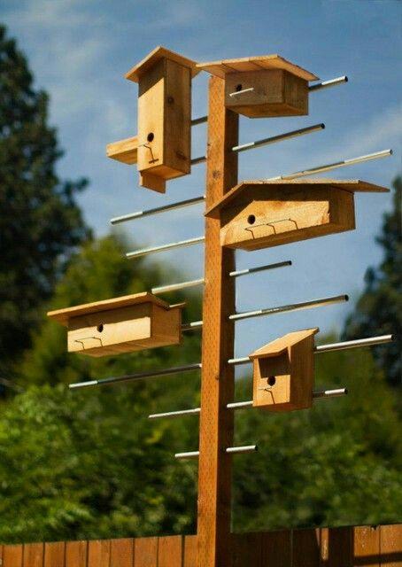 1000 Images About Bird Gardens On Pinterest Purple