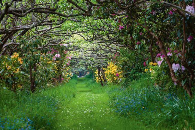 Take a stroll through the glorious orchards of The Pear Walk in Lalla, Tasmania.  Rhododendrons and azaleas bloom...