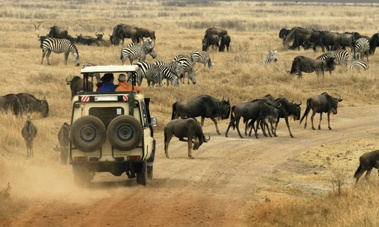Legit African Safari. I want to be in that car!