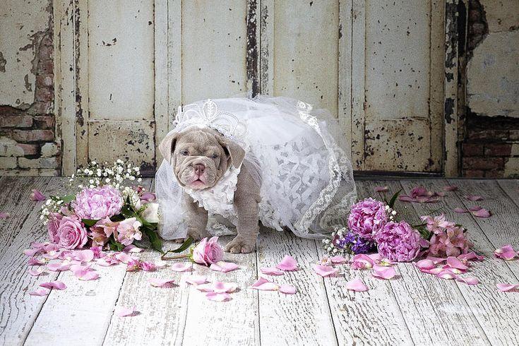 Dog Bride Painting by Lisa Jane