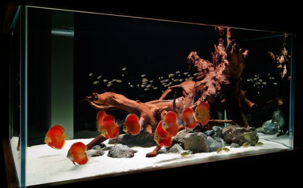 Contemporary fish tank crafted in hues of captivating red looks more like a lasting work of art