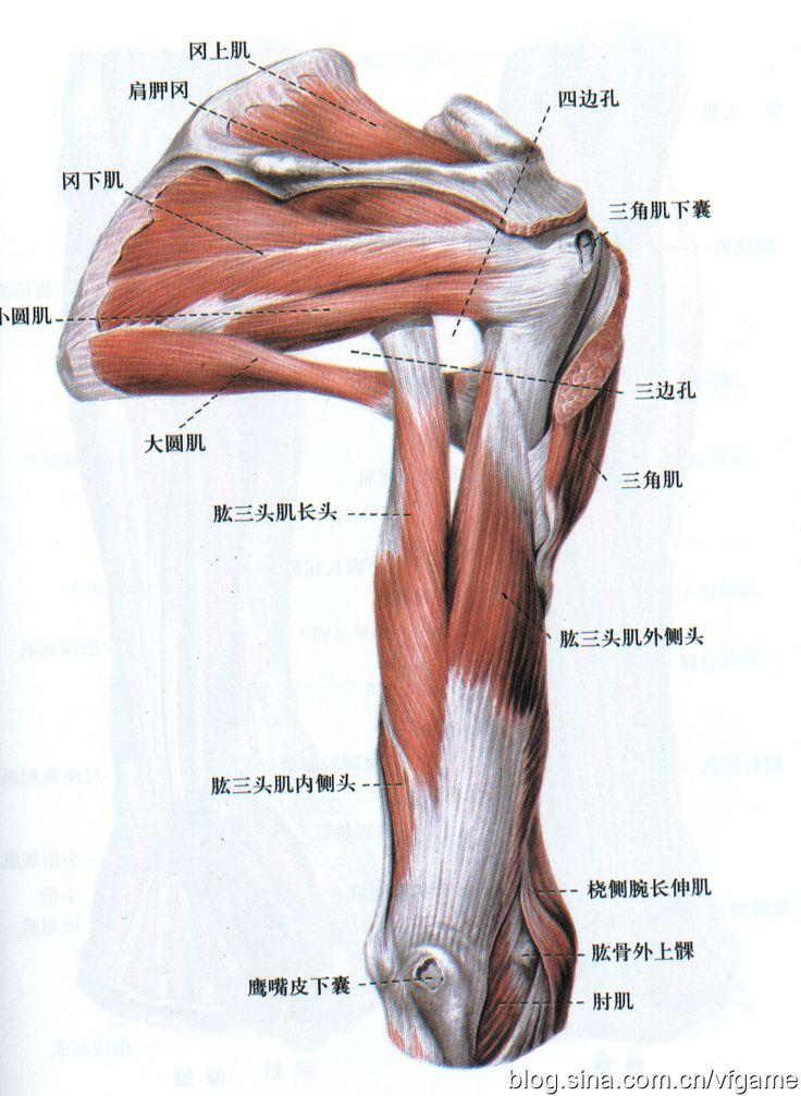 Fantastisch Gnomon Workshop Anatomie Bilder - Anatomie Von ...