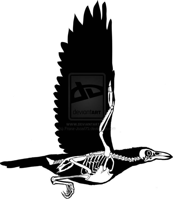 Crow Skeleton by Franz-Josef73.deviantart.com on ...
