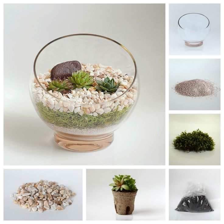 How to build a Terrarium!