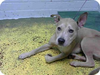 Atlanta, GA - Labrador Retriever Mix. Meet MINERVA, a dog for adoption. http://www.adoptapet.com/pet/16576479-atlanta-georgia-labrador-retriever-mix