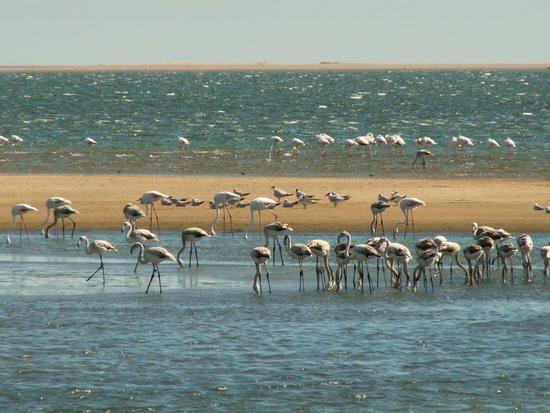 Walvis Bay | Walvis Bay | Erongo | Namibie : Guide de voyage - Tourisme - Activité ...