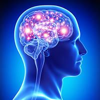 Clinical studies have shown it can help to improve cognitive functioning, fight fatigue, promote heart health, and alleviate cellular oxygen-starvatio