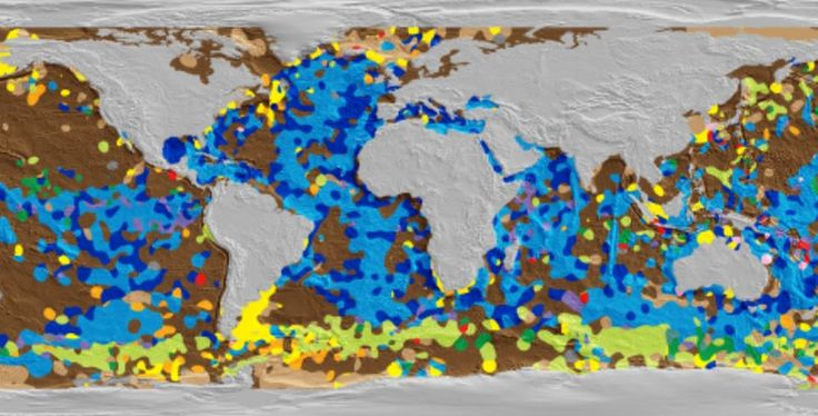 First digital map of seafloor reveals kaleidoscope of diversity