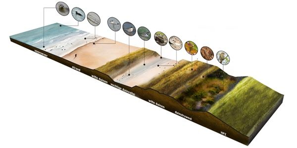 West8 Urban Design + Landscape Architecture