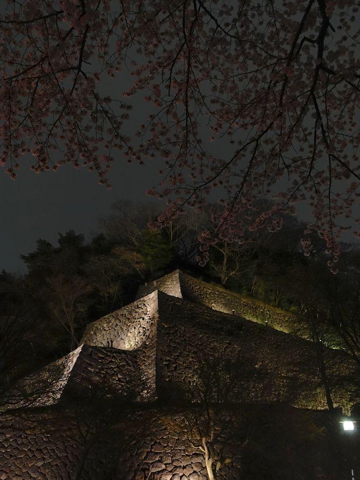 金沢城石垣と夜桜