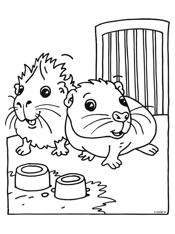 meerschweinchen malvorlage  niedliche meerschweinchen
