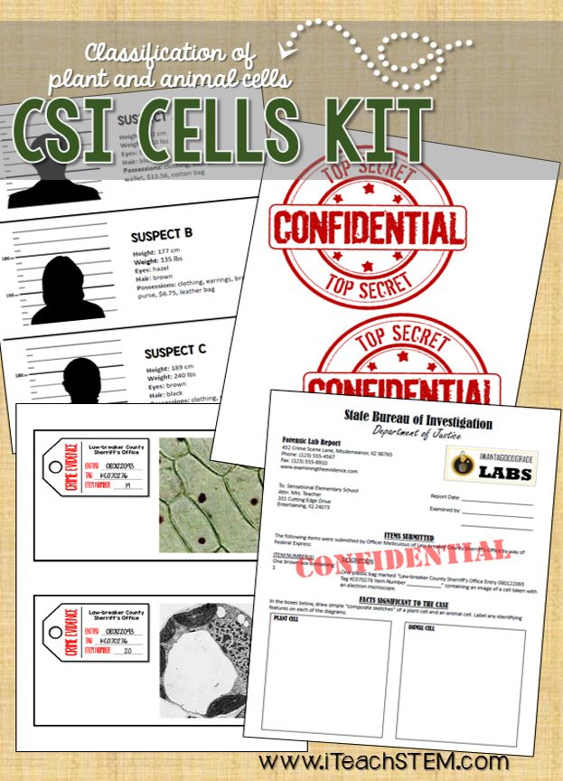 """An idea for a STEM project where elementary students solve a mystery based on their knowledge of the major differences between plant and animal cells. Students apply their understanding to a """"real-life"""" scenario in which they must draw models of cells, classify images of cells as plant or animal, and record their conclusions in a forensic lab report. Designed for 4th or 5th grade, but could easily be adapted for middle or high school too."""