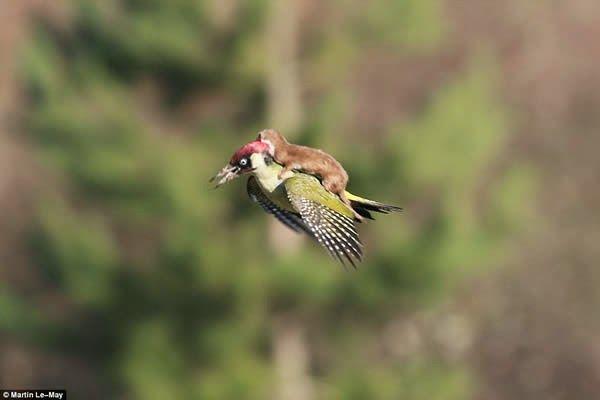 12 Extraordinary Picture of Animal Behavior. | TeluuDailies