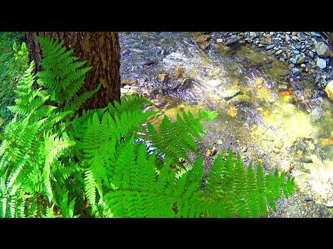 Mountain Fresh Water for Clearing Your Mind - YouTube