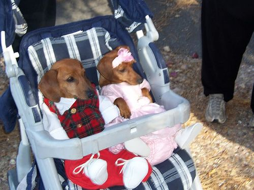 Baby Dachshunds in baby clothing~the things we do to our doxies....and they still love us!! lol