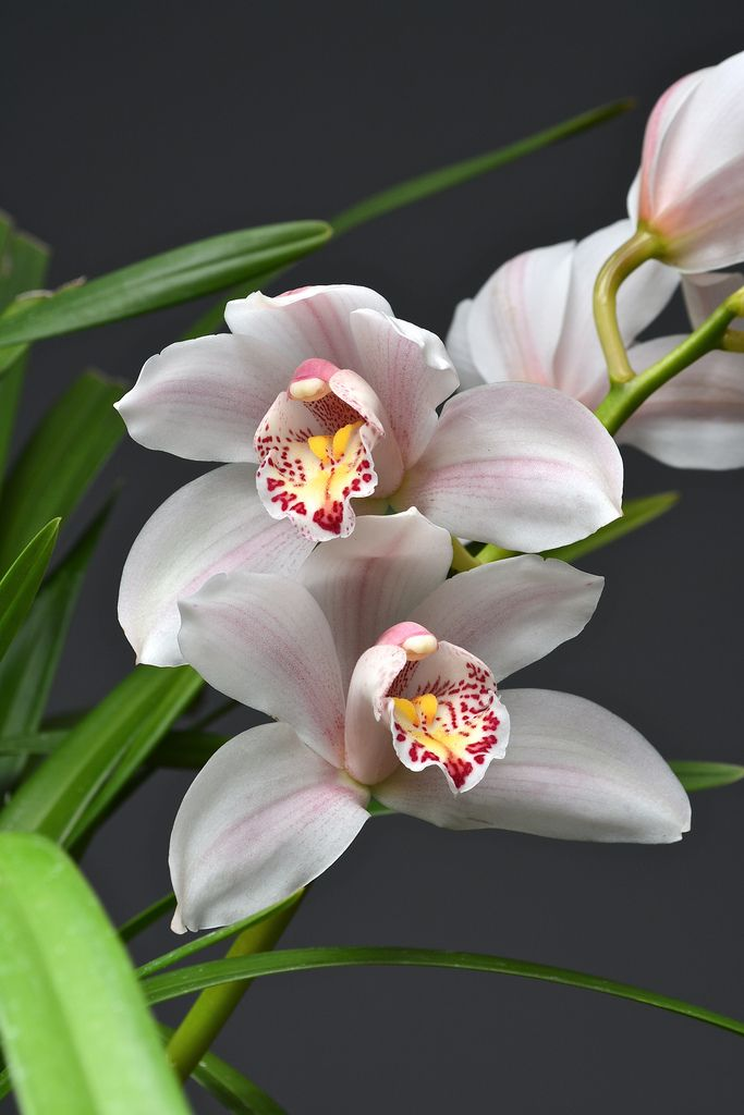 39 Best Orchid Stems Joshua Images On Pinterest